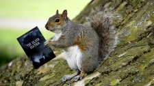 Book Squirrel Reading TSF