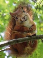 Squirrel 2014-08-14 21.04.23