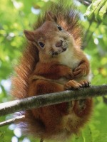 Squirrel 2014-08-14 21.04.23